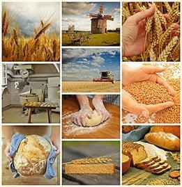 Flour Mil-Winning Foods Image